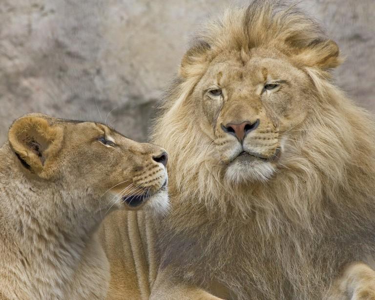Sacramento Zoo | © Mitch Lorens / Flickr