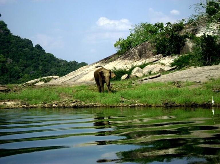 A wild elephant walks along the lake shore in Gal Oya National Park