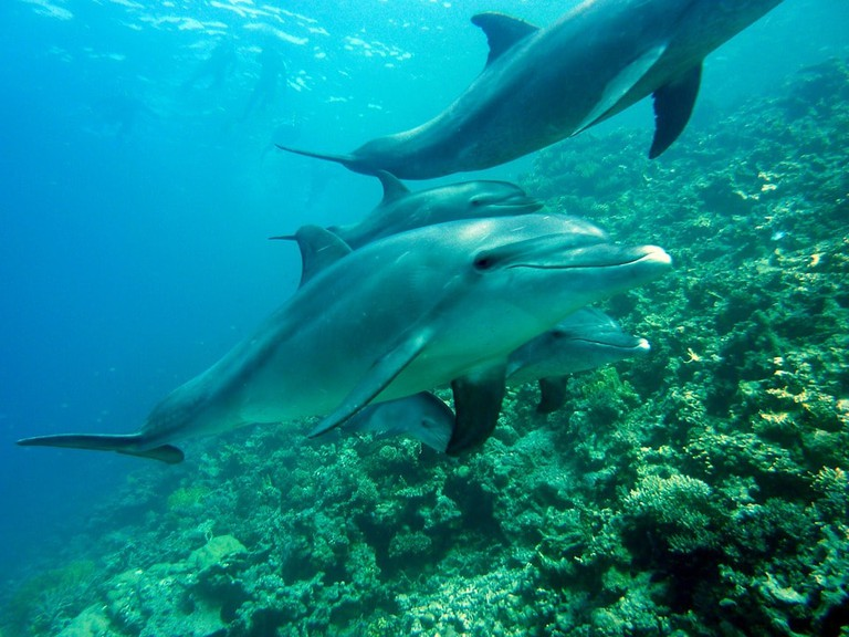 Diving with dolphins   © joakant / Pixabay