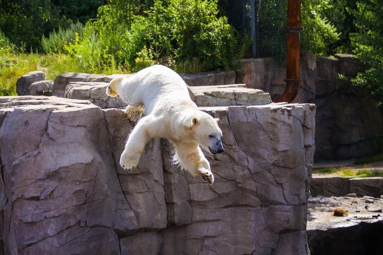 polar-bear-2694906_1280