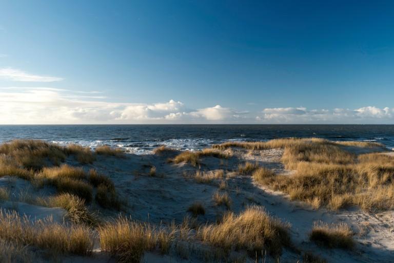 Île d'Amrum, Allemagne |  © bluecrayola/Shutterstock