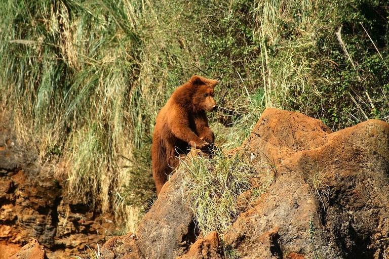 A bear at Parque de Cabárceno, Cantabria, Spain   ©Mario Modesto Mata / Wikimedia Commons