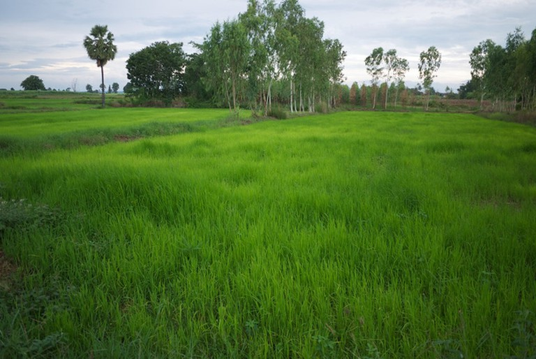 Scenic rice fields are to be found here