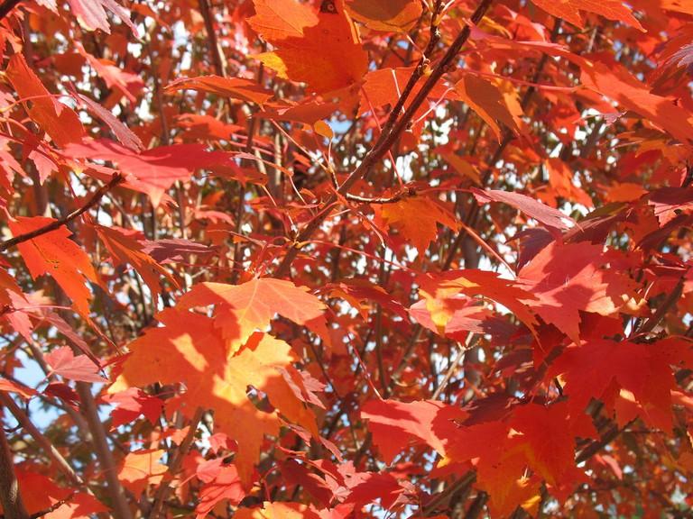 Fall foliage at the U.S. National Arboretum