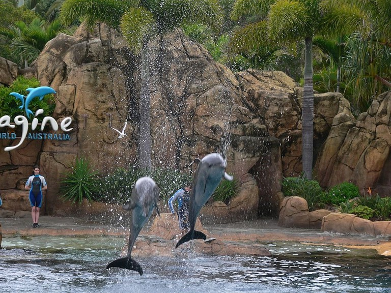 Dolphin Show at Sea World on the Gold Coast | © Flying Cloud_Wikimedia Commons