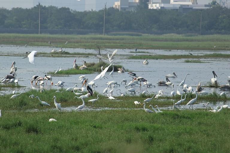 Fishing_of_different_species_of_birds_in_Marshland_Pallikaranai
