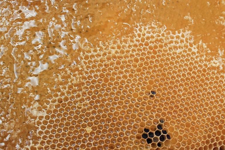 masaza z medom