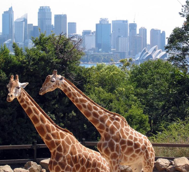 Taronga Zoo | © Jan Derk_Wikimedia Commons