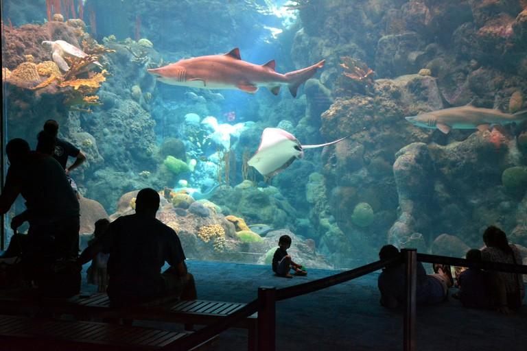 Florida Aquarium, Tampa