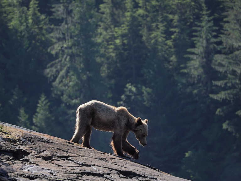 Grizzly, British Columbia