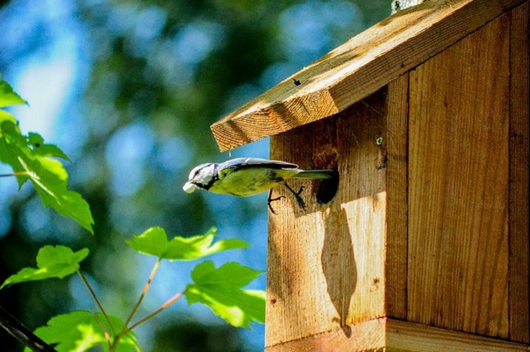 Volery Tiny Tit Bird Aviary Great Tit Birdhouse