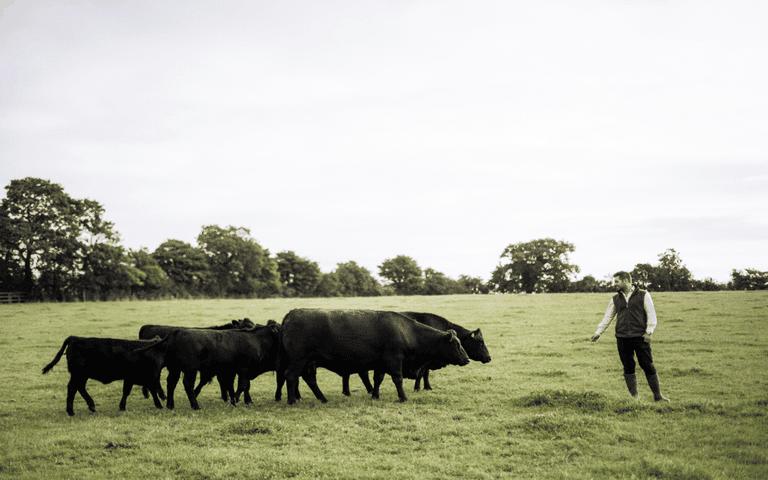 Hartley Farm, Bath, 2018
