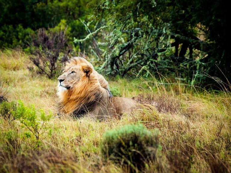 Lion Sands Game Reserve, Sabie Park