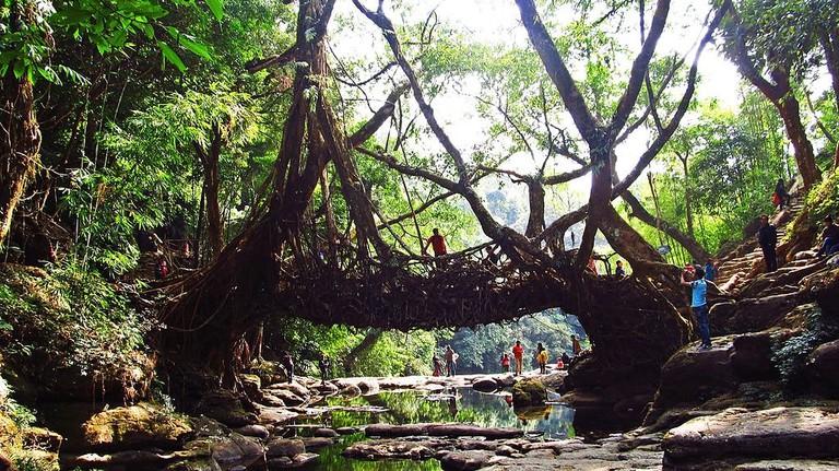 Living Root Bridge Kiranjit WikiCommons