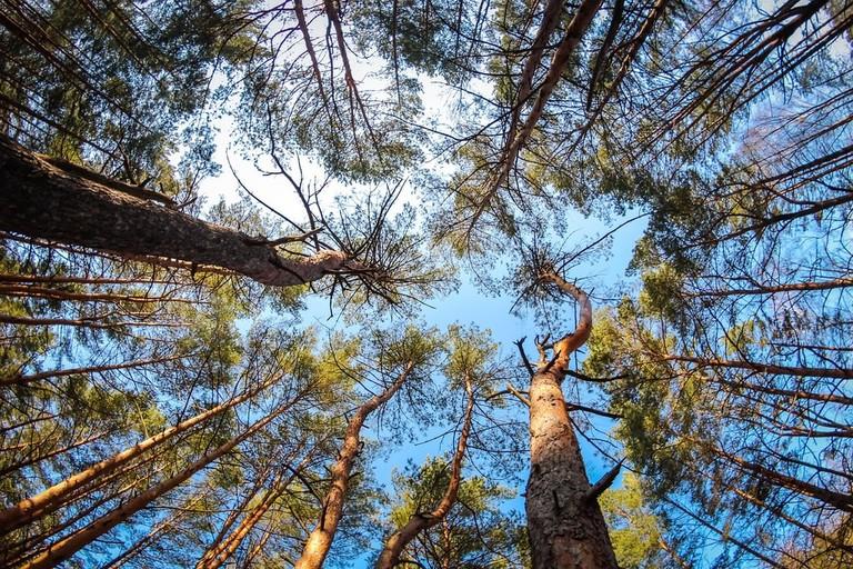 Khmilnyk Ukraine forest