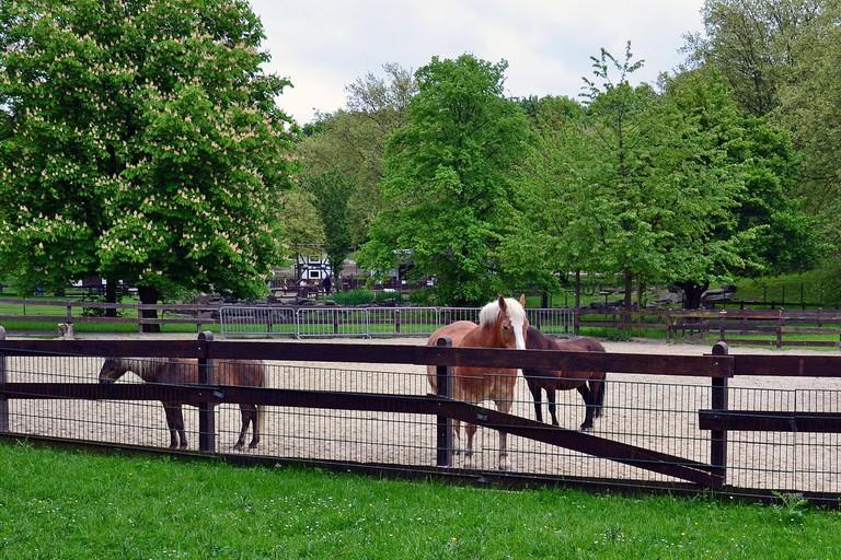 1280px-Ponyhof,_Grugapark_Essen