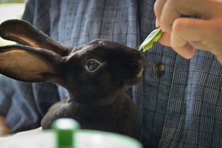 Cute, friendly rabbit in a cafe