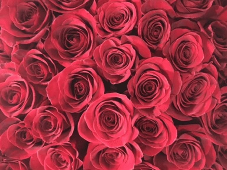 Rosa Rosa Flowers, New York