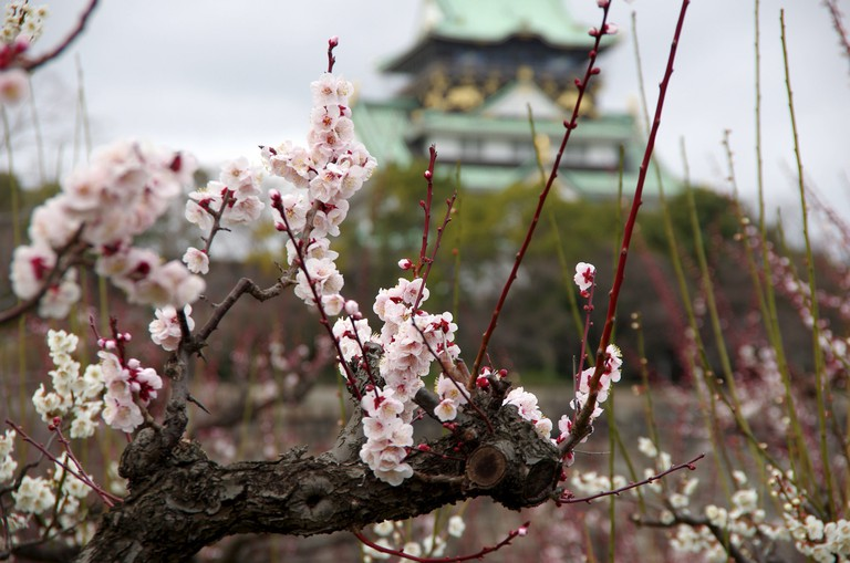 osaka_castle_park_plums_japan