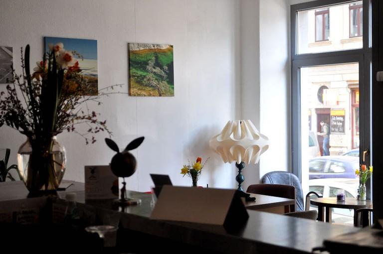 Falscher Hase, Dresden