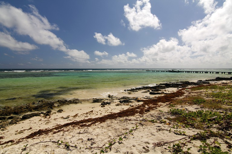 A view of in nature of theMahahual beach