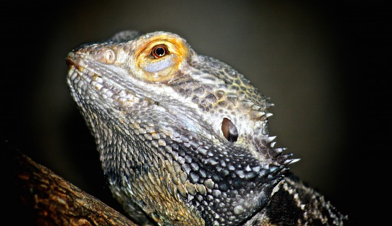 Reptile at São Paulo Zoo