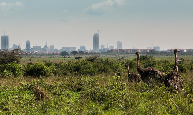 Ostriches in Nairobi National Park