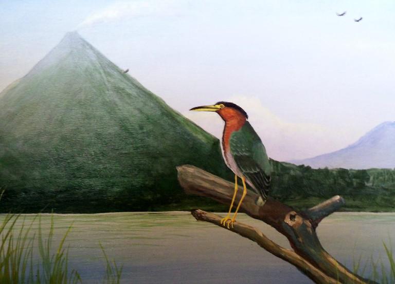 Heron on Lake Arenal