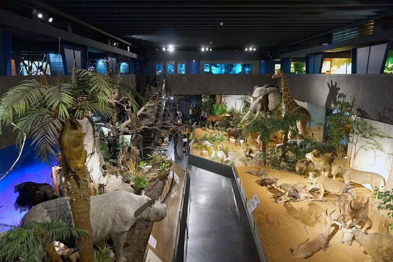Natural History Museum of Geneva, Genève