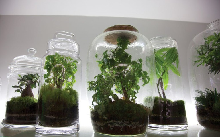 Green Factory is best known for its 'Jurassic lab' terrariums,