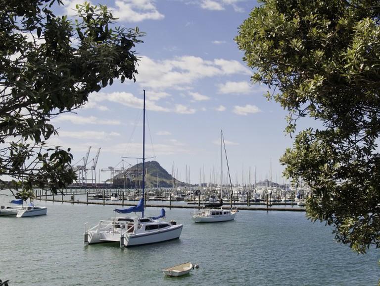 Cataramarans moored in Tauranga Harbor