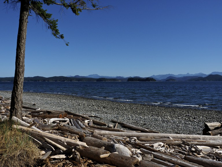 Driftwood on Rebecca Spit's shores