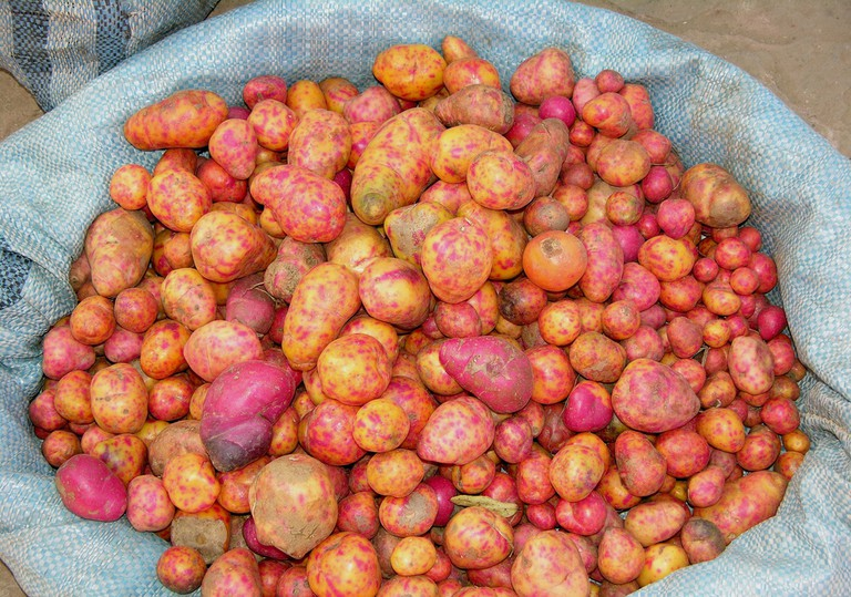 Find colorful potatoes at the market too