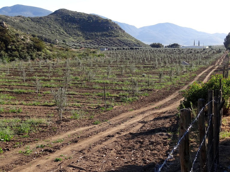 Wine country in the Valle de Guadalupe, Ensenada