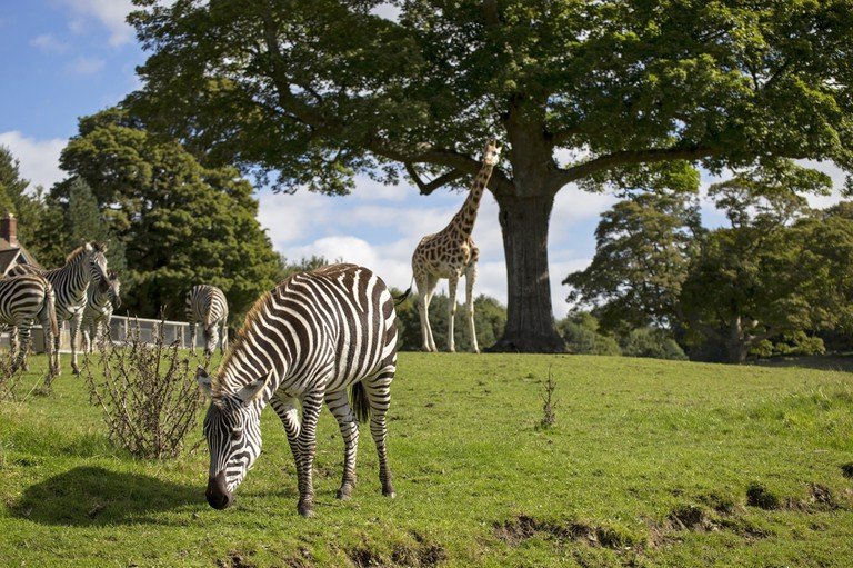 Longleat Safari & Adventure Park