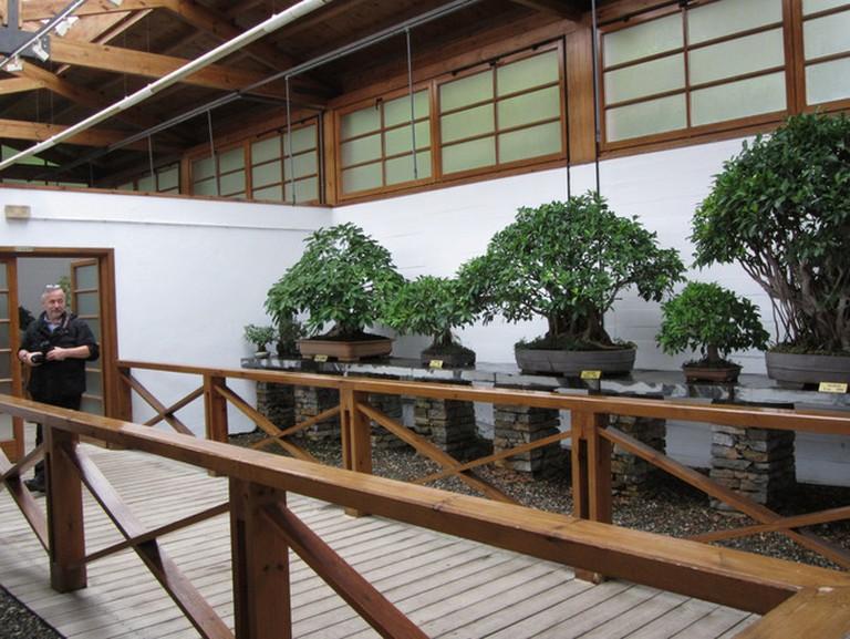 Museo del Bonsai, Marbella