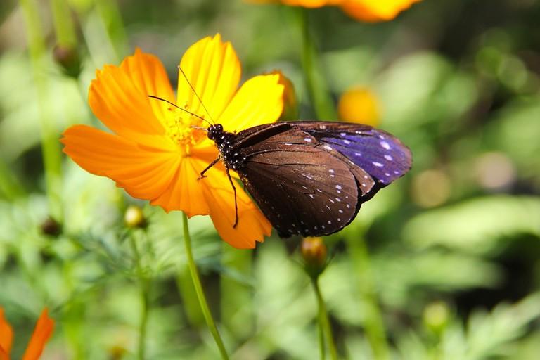 Luan Prabang Butterfly Garden