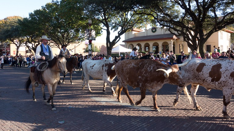 A Fort Worth Stock Yards cattle drive