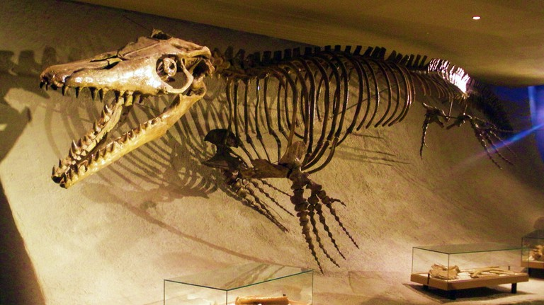 The museum's famed Mosasaurus cast