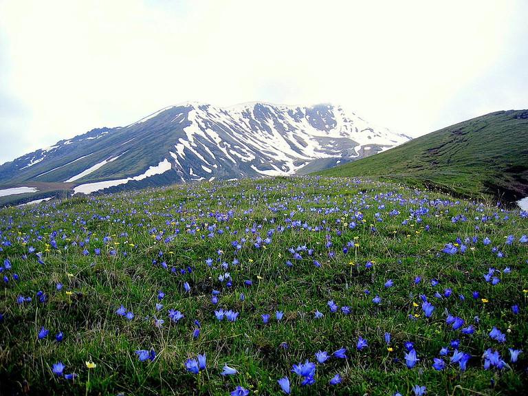 Gergeti Glacier