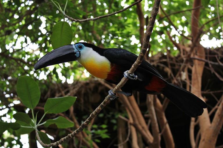 Bird at Duisburg Zoo