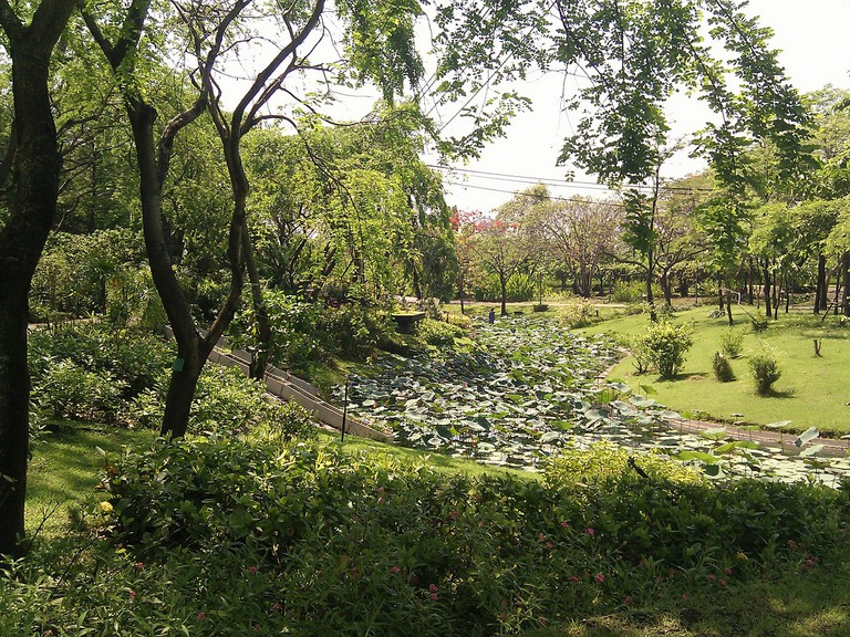 Greenery in Queen Sirikit Park in Chatuchak, Bangkok