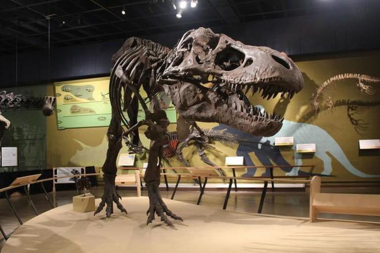 Tyrannosaurus (JANE) at Cleveland Museum of Natural History
