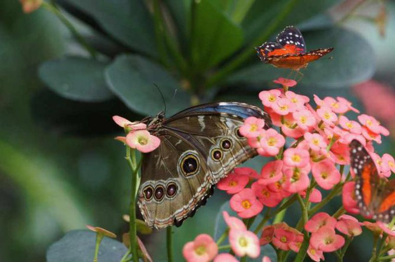 Butterflies at the Pacific Science Center