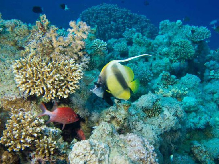 Red sea coral reefs
