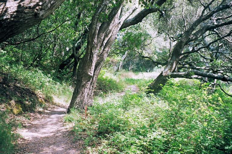 Junipero Serra County Park