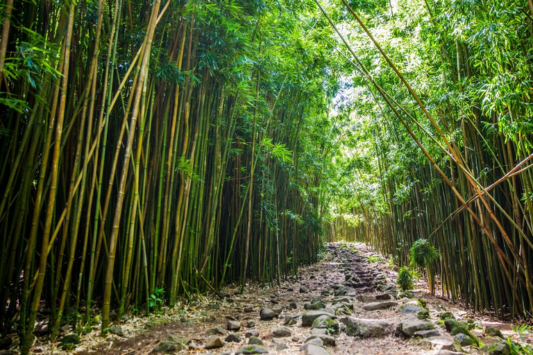 Bamboo Forest | © Max Delaquis/Flickr