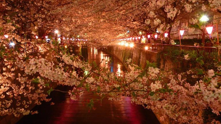 Along the Meguro-gawa
