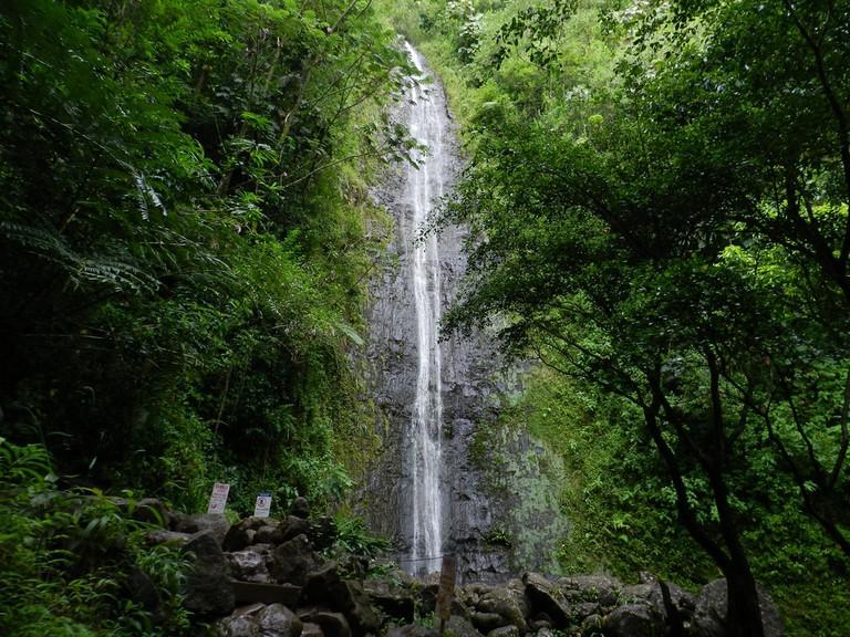 Manoa Falls | © Cardon Fry/Flickr