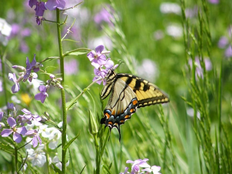 ButterflyPark